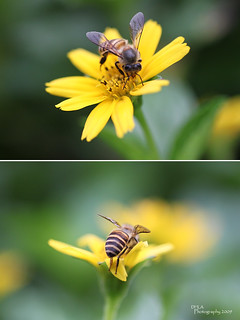 A Bee Story... | by Danny-flickr