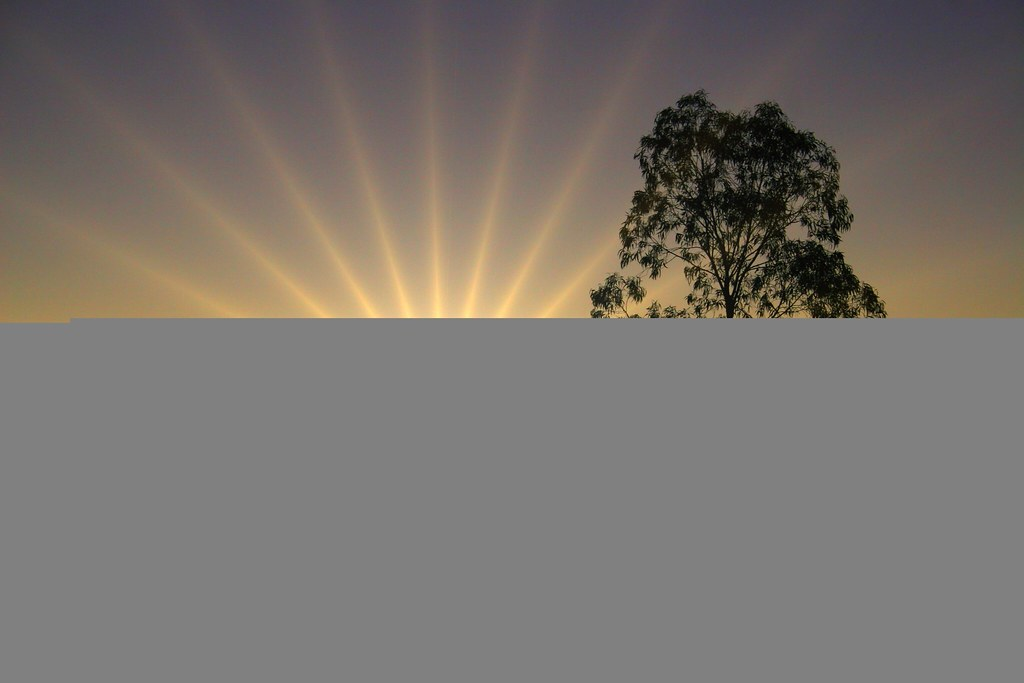 Image result for early morning sun