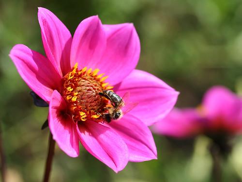 sch ne blumen sind fast niemals allein 2 beautiful flower flickr. Black Bedroom Furniture Sets. Home Design Ideas