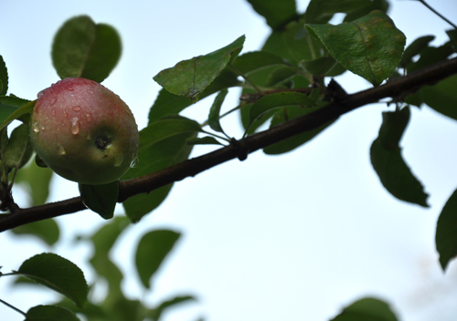 ... apple branch | by imagine childhood