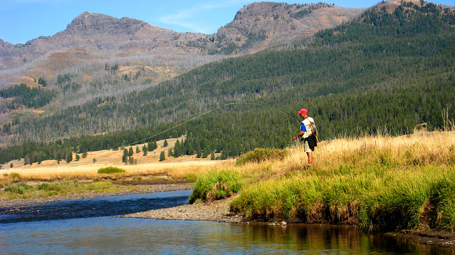 Slough creek yellowstone national park fly fishing in for Yellowstone park fishing report