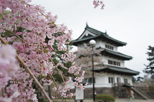 Hirosaki castle in cherry blossom festival season | by yisris