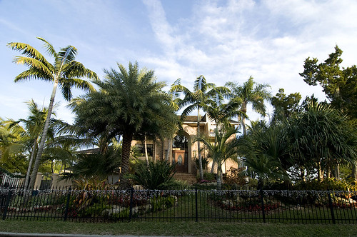 Landscaping Sarasota Florida with Tropical Palm Trees | by Sarasota Secret Gardens