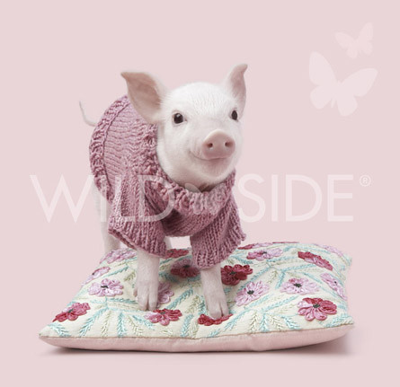 Pandora the pink purled piglet | by Deadly Knitshade