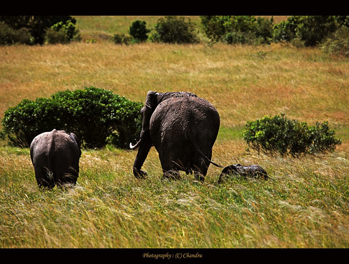 Roaming Family | by lensbug.chandru