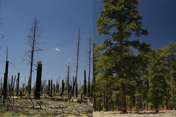 Arizona Wildfire, Before and After 13247 | This is exactly ...