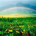 Valley Rainbow - Katmai National Park