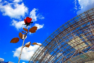 Red rose, blue sky and modern architecture | by Tobi_2008