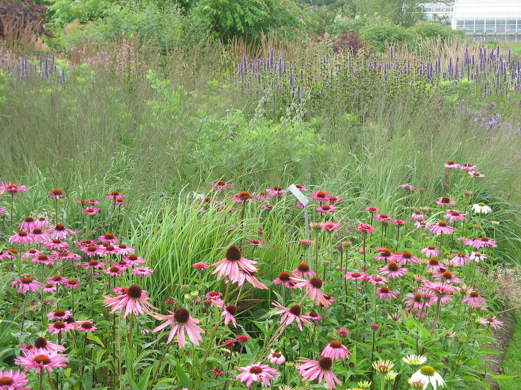 Piet oudolf border rhs tuin wisley wisley juli 2009 for Planting the natural garden piet oudolf