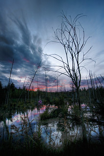 Swamp | by ˙Cаvin 〄
