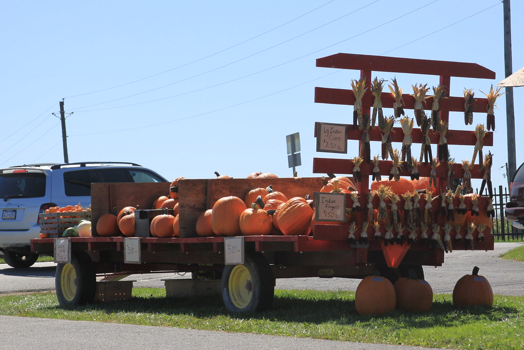 Pumpkin Dealer in Amish Country