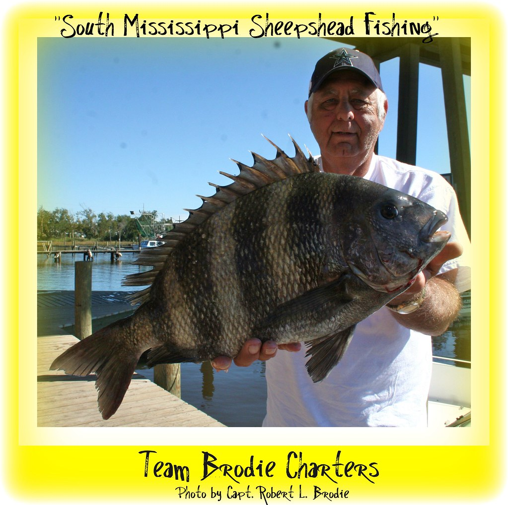 A Big South Mississippi Sheepshead James Garthright Of T