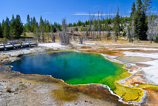 Yellowstone National Park | by Daniel Newcombe