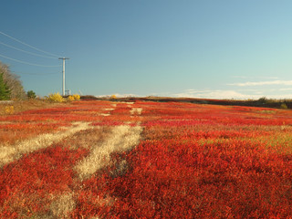 Blueberry Barrens in Late Autumn #1 | by 9brandon