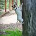 Basil gets a jump on holiday fun!