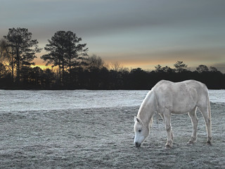 Horse at Serenbe Farms | by Max Eremine
