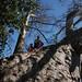 Posing on giant Baobab Tree