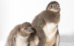 how to get to nagasaki penguin aquarium