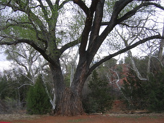Img 5631 Red Rock State Park The Wedding Tree Mkcorley Flickr