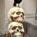 SkullPlanter2