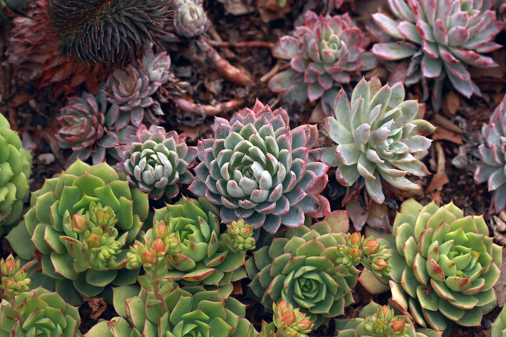 Succulent garden a beautiful array of different for Different garden plants