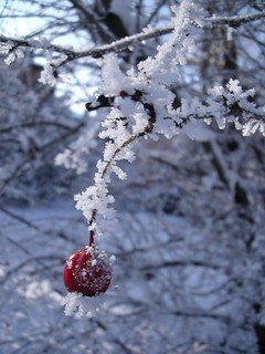 Frozen red berry | by Mammaoca2008