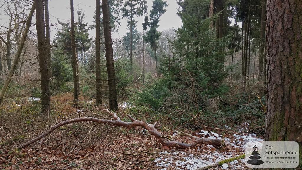 Ohligsberg im Binger Wald