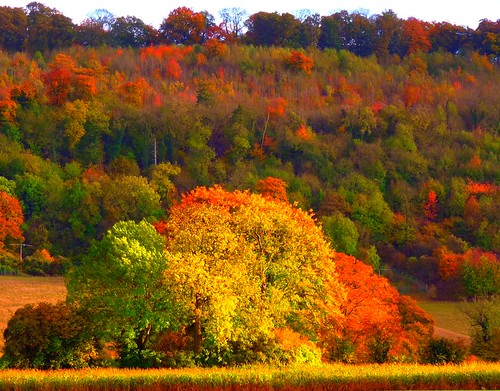 Legendary Autumn in The Chilterns | by algo