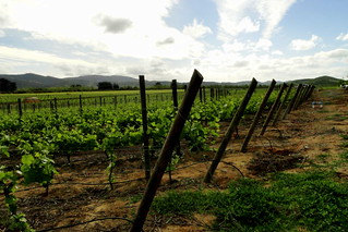 Trinidad vineyards III | by Dear Garou