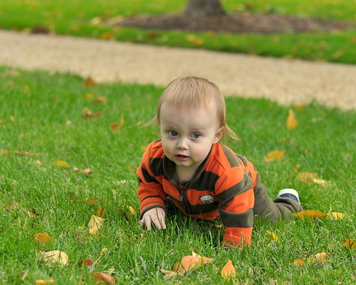 Aidan explores the Capitol's grass | by matthew_culbertson
