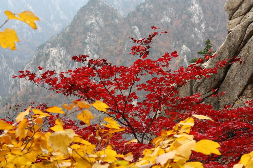 Mùa Thu Hàn Quốc ở Seoroksan