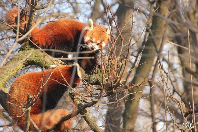 Tierpark Friedrichsfelde 29.01.201722