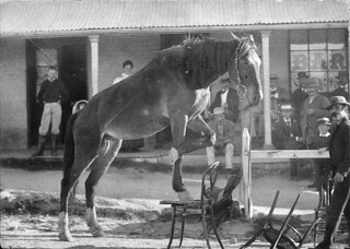 Performing horse in front of Telegraph Hotel in Manners Street - Tenterfield, NSW. ca. 1895 / Alfred Benjamin Butler | by State Library of New South Wales collection