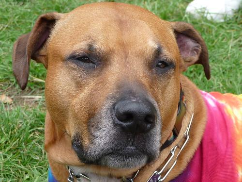 Image Result For Bpro Dog