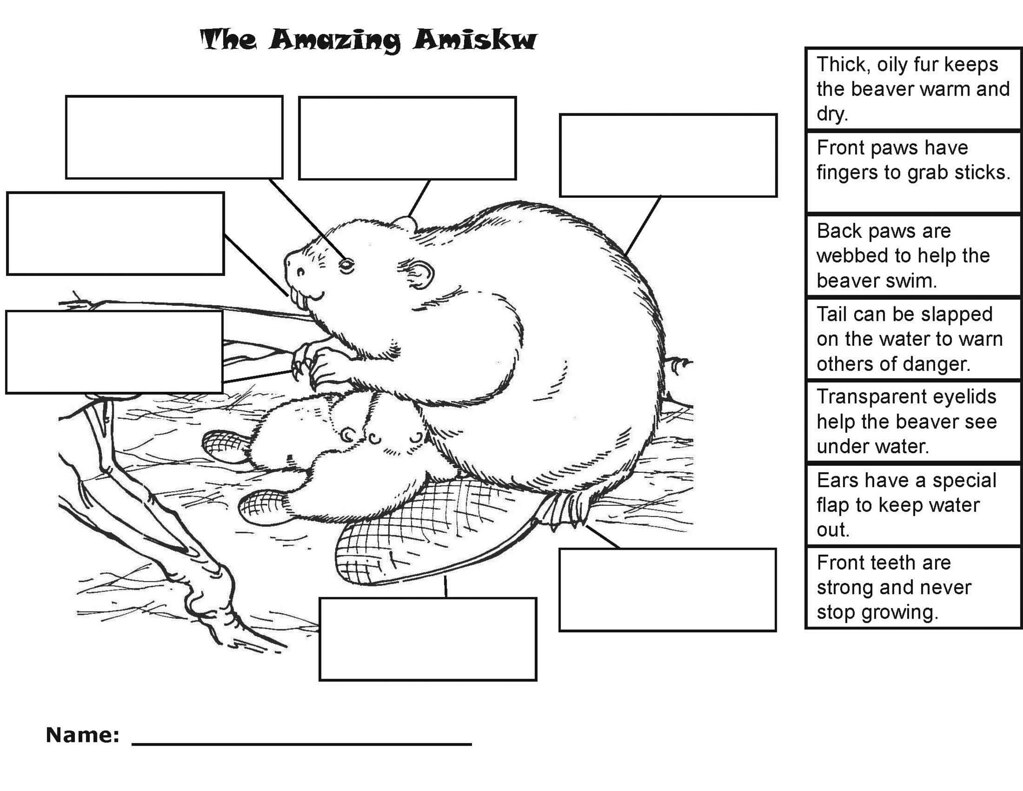 Worksheets Adaptation Worksheet all sizes amazing amiskw beaver worksheet simple flickr photo sizes