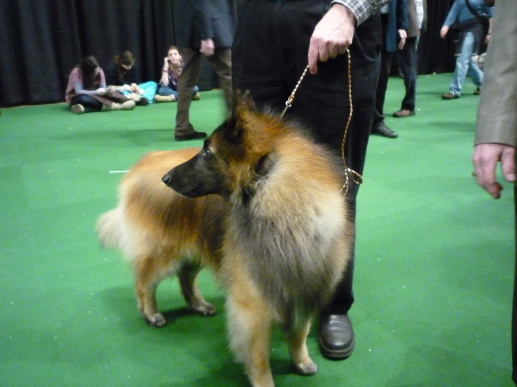 Kennel Club Dog Show Philadelphia
