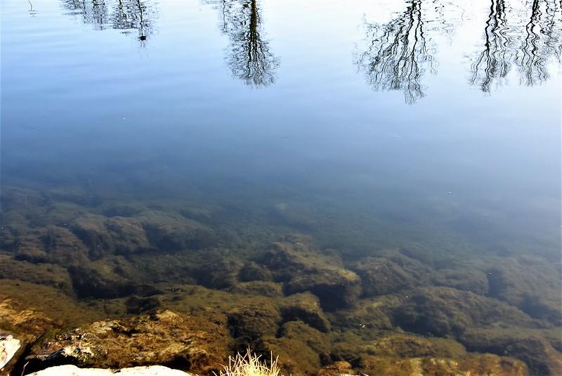 River Aar 14.02 (12)