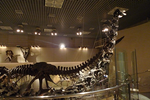 Apatosaurus skeleton | by edmundyeo