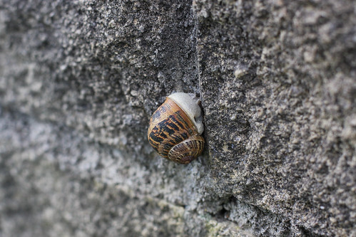 Snail on Stone Wall | by erikrasmussen