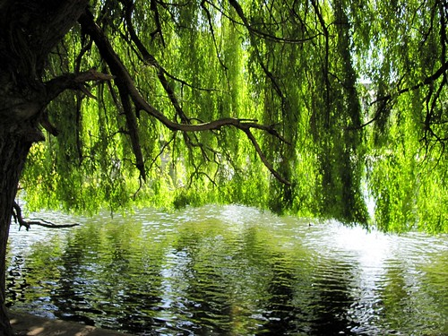 under the willow tree Lyrics to willow song by jasmine thompson: down by the water, under the willow sits a lone ranger, minding the willow he and his wife, once liv.