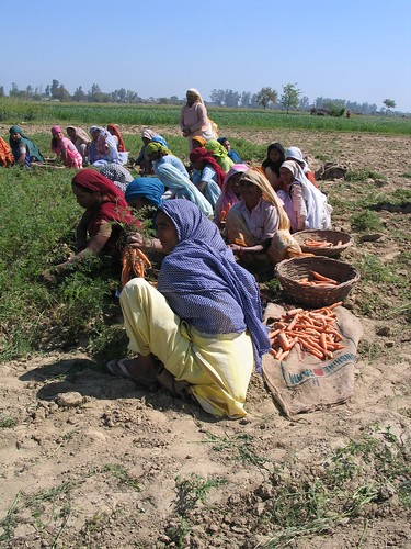 CPWF Basin Development Challenges - Ganges delta | by Water and Food