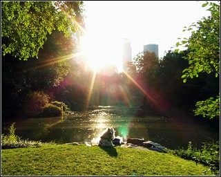 "Central Park ""Dog in the Sun"" 
