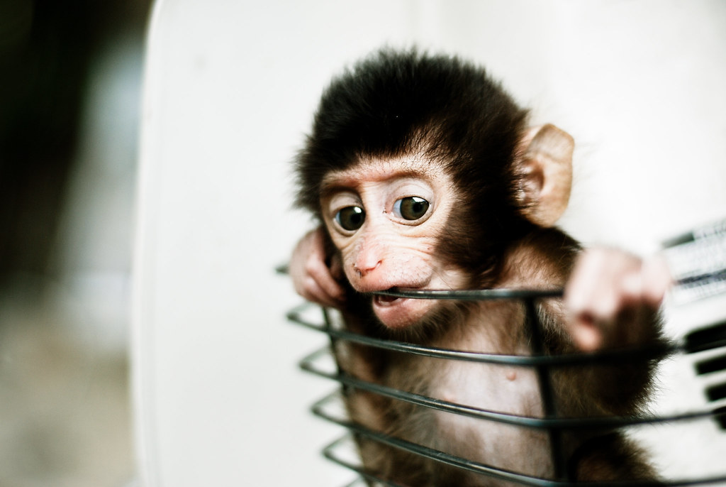 Baby Monkey In A Basket A Baby Monkey My Uncle Has A Baby Flickr