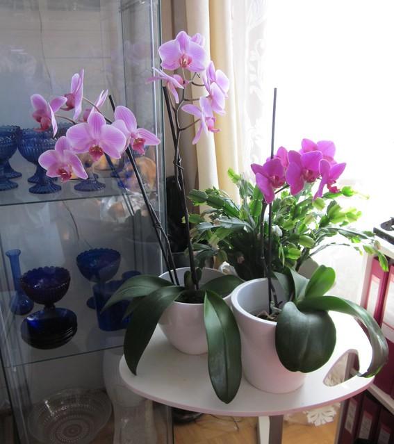 orchids corner