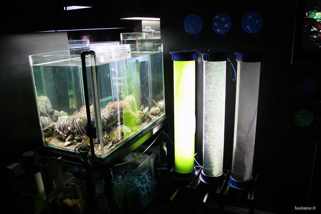 Tout est soigneusement etudié pour le bien être des pensionnaires de l'aquarium
