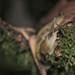 Slug Forest