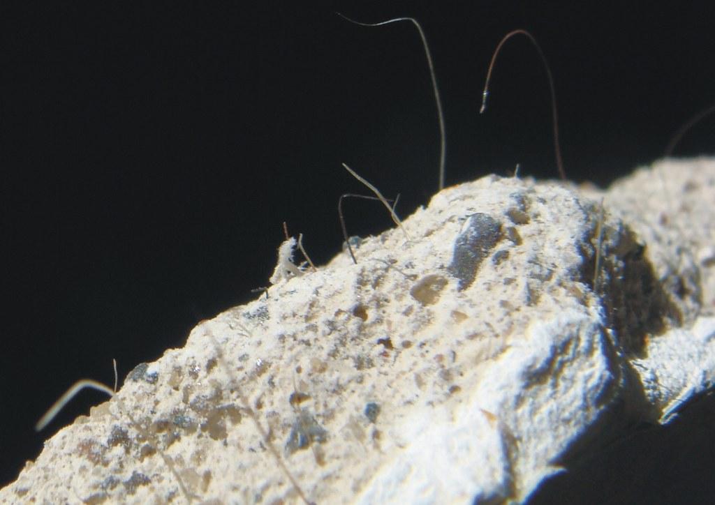 Asbestos plaster 10 seen enough asbestos fibers in for Does drywall have asbestos