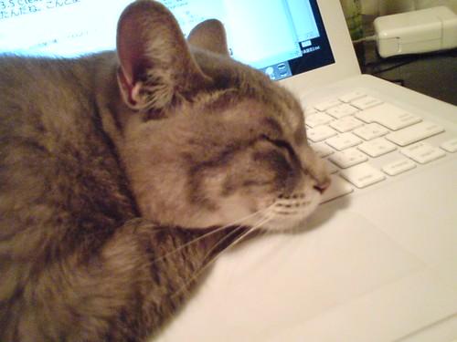 """MacBook is a my pillow"""