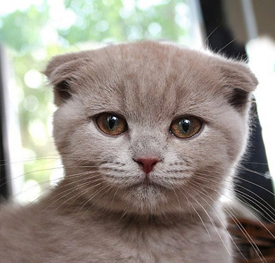 Gavin Free New Cat