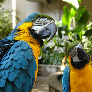 Bird Kingdom Tropical Adventure | by Smart Destinations